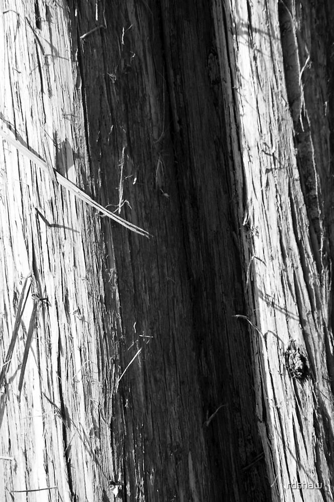 Cedar by rdshaw