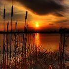 bullrush Sunset by doublevision