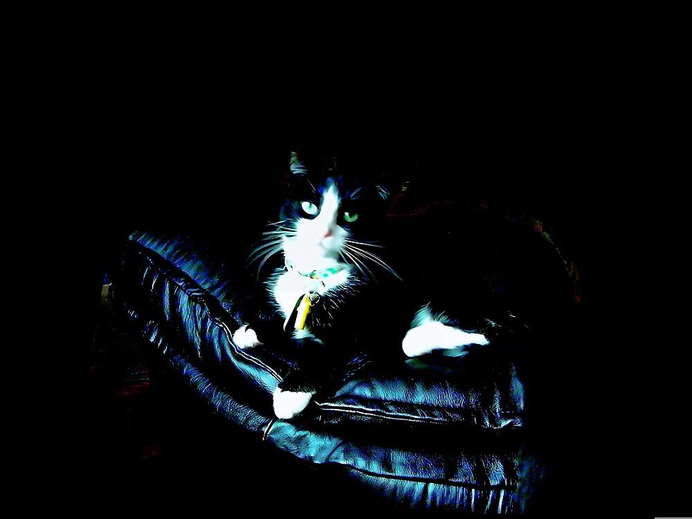 My kitty Sophie by MidsummerDi