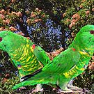 Scaly-Breasted Lorikeet Pair by Bev Pascoe