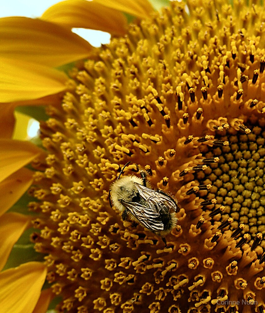 One Bee's Delight ! by Corinne Noon