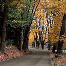 Bend in the Buffalo Road by Wayne King