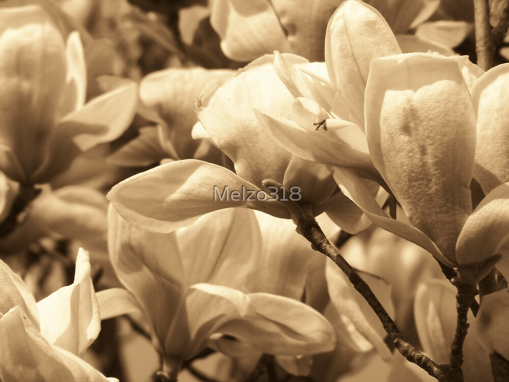 Mom's Magnolia's by Melzo318