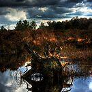 irish bog wood by doublevision