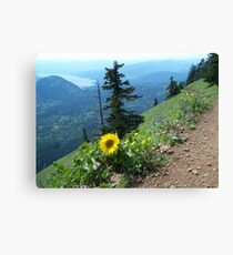 Dog Mountain - Columbia River Gorge - Balsom Wood Canvas Print