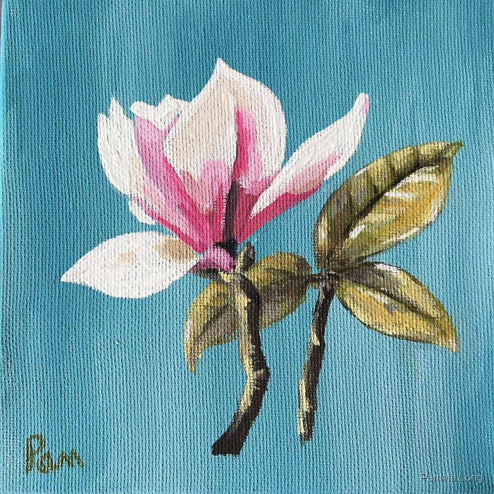 Japanese Magnolia bloom #1 by Pamela Long