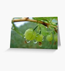 Gooseberries After the Rain Greeting Card