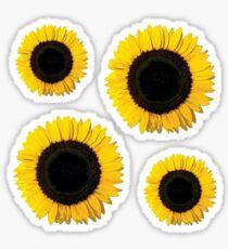 Painted Sunflower | Botanical Canon Sticker