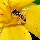 bee visiting a yellow alder by lensbaby