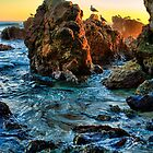 Seagulls At Sunset In Laguna Beach California by K D Graves Photography