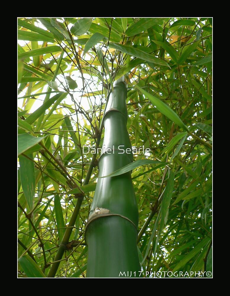 Bamboo Banga by Daniel Searle