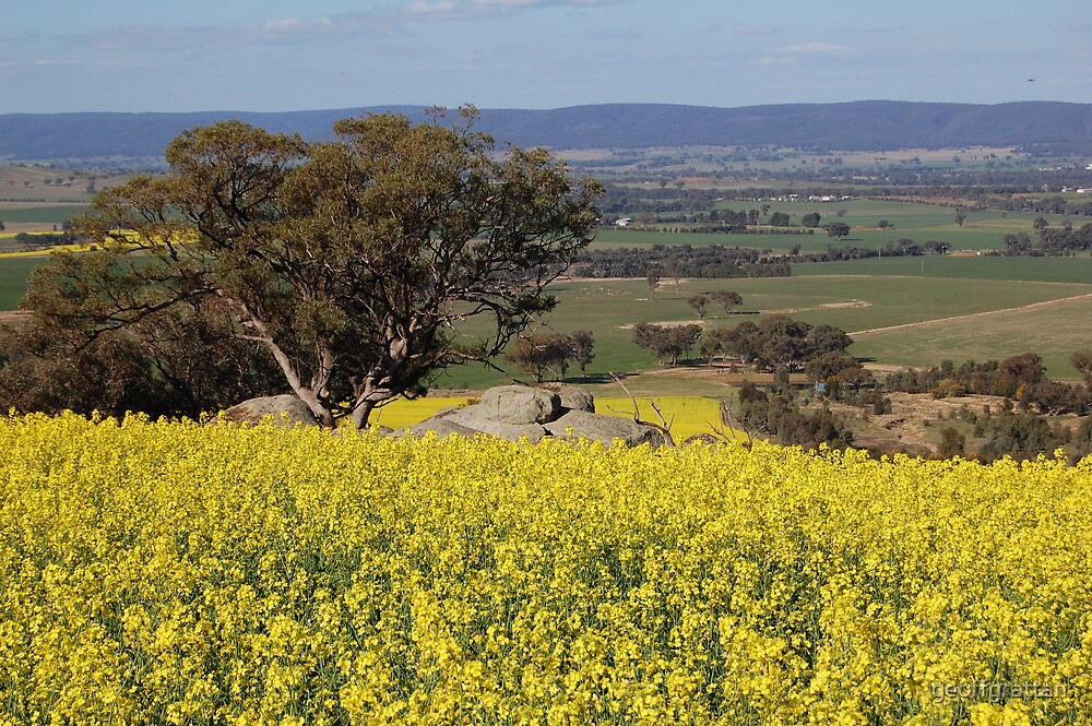 lachlan valley from Chews lookout by geoffgrattan