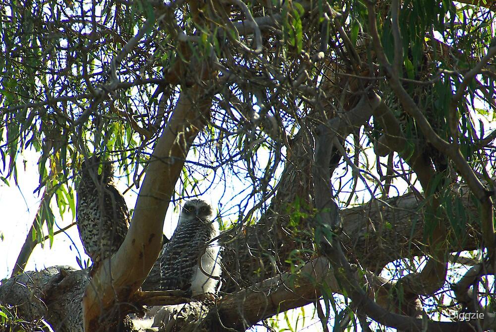 Powerful Owl Family 26 by Biggzie