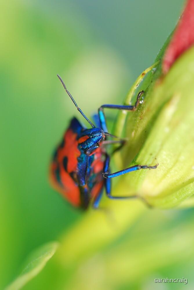 Beetle On Flower 1 by sarahncraig
