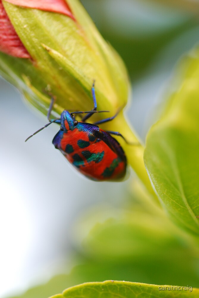 Beetle on Flower 2 by sarahncraig