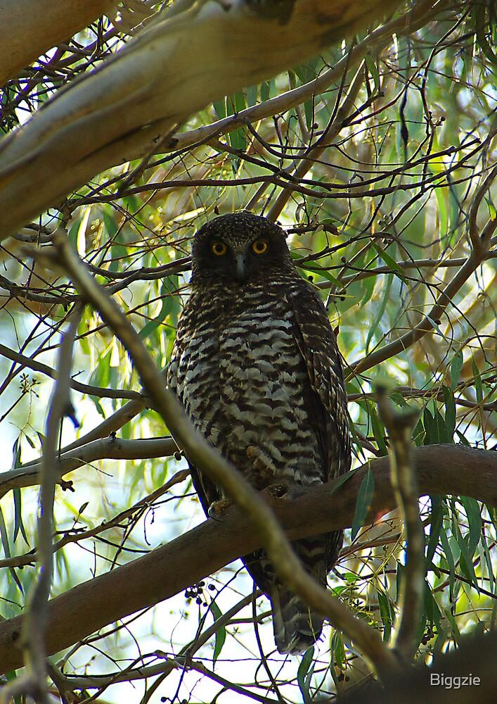Powerful Owl Family 22 by Biggzie