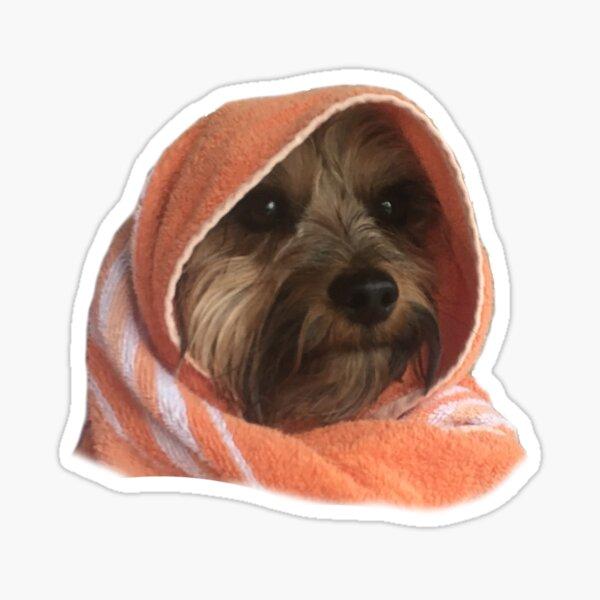 Murphy the Yorkie Sticker