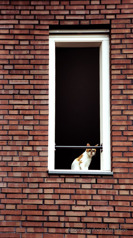 Cat in the Window by Alison Cornford-Matheson