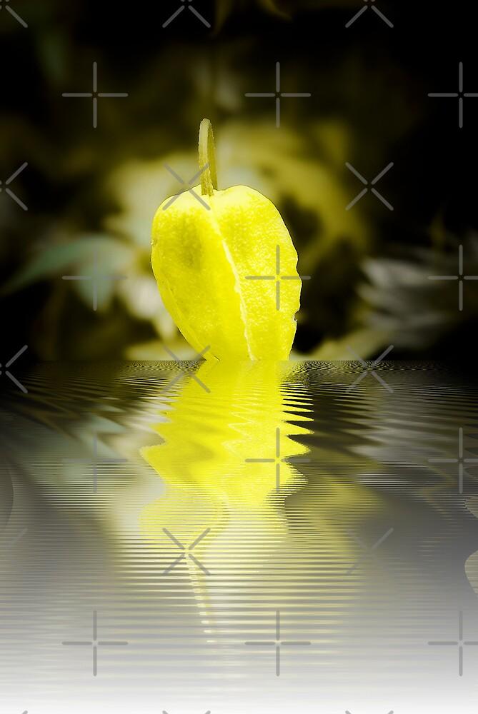 Yellow Lantern by Catherine Hamilton-Veal  ©