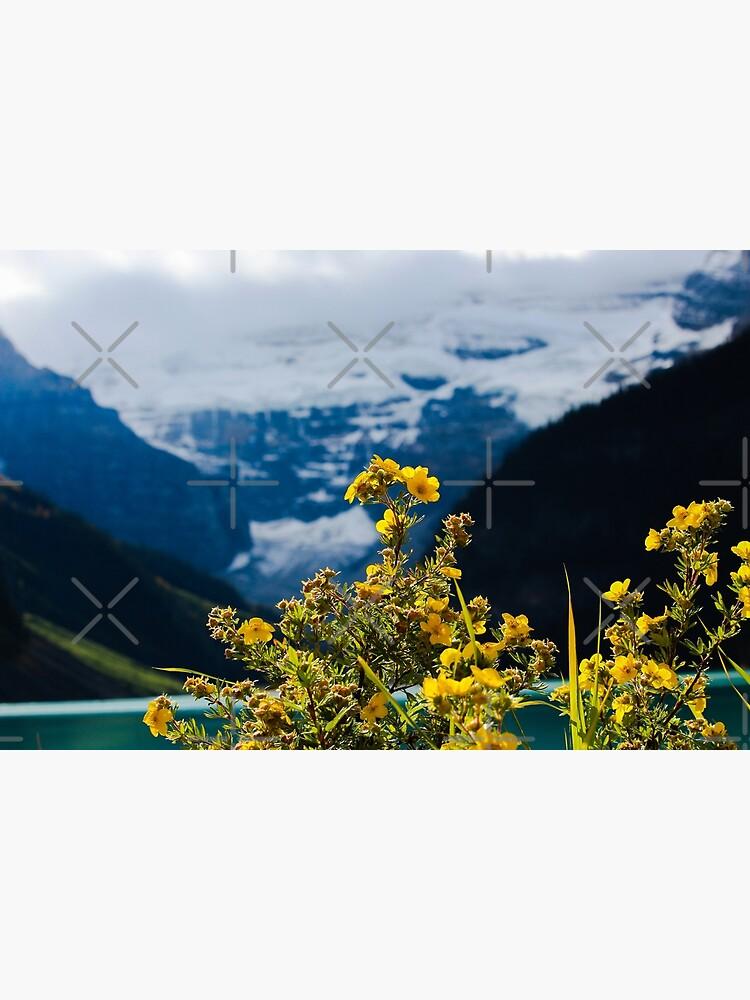 Mountain sunshine by debfaraday