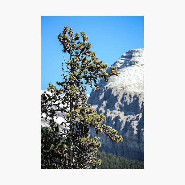 Mountain tree Photographic Print