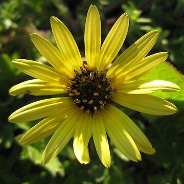Flower of the sun by monzastar