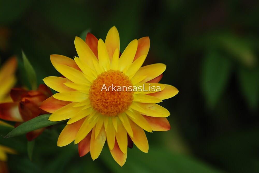 Sunny by ArkansasLisa