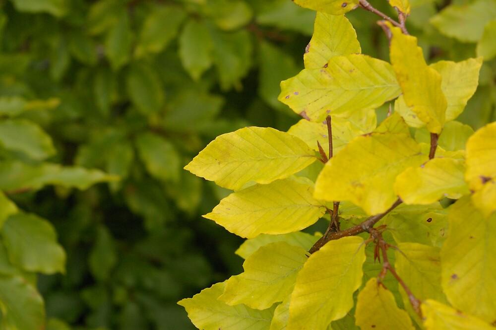 leaves by emmatcb