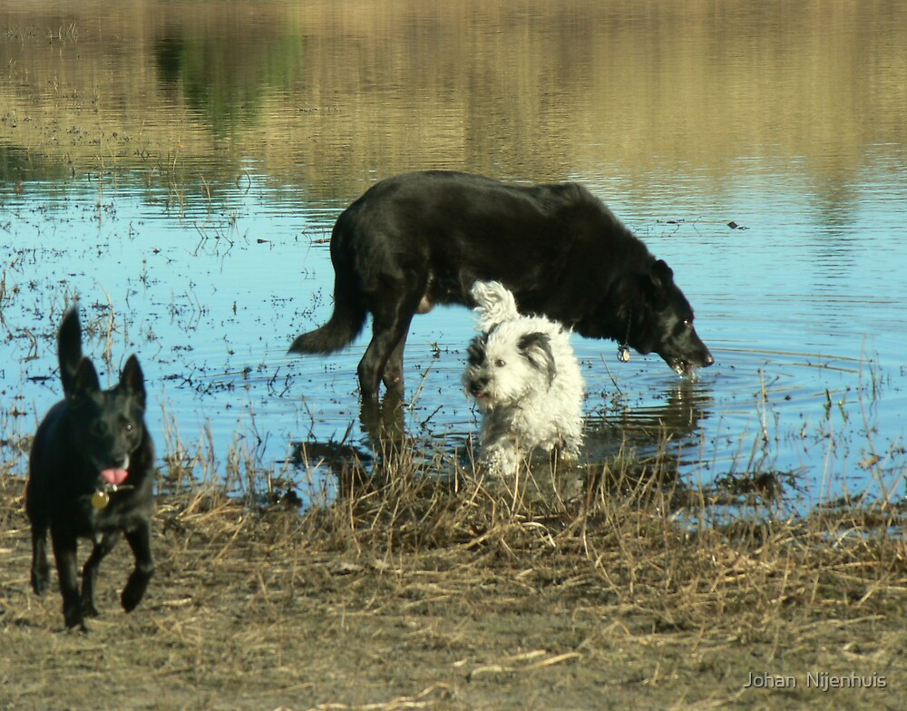 CATHY ,*BOOMER*(rip1998-01/03/2010)  and GIZMO by Johan  Nijenhuis