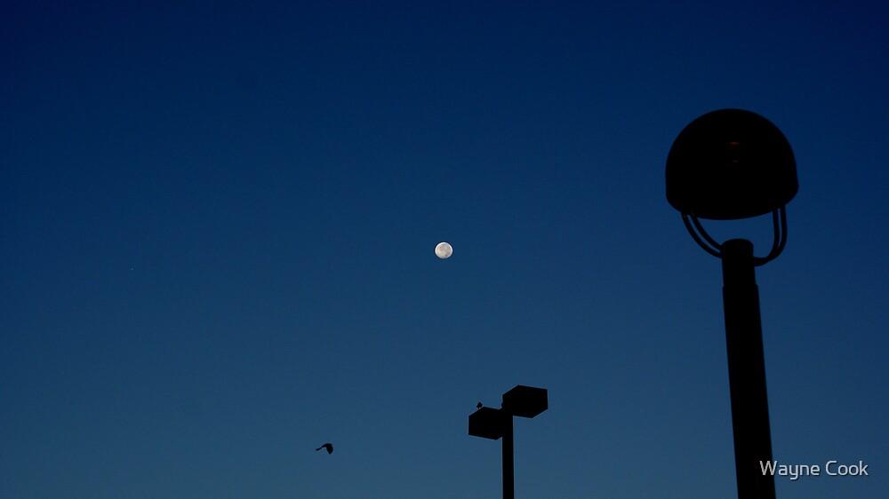 Night Flight by Wayne Cook