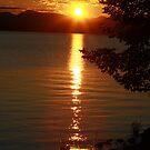 Golden Evening Sun Rays by Deborah  Benoit