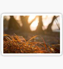 Dried orange red grass closeup beach sunset Sticker