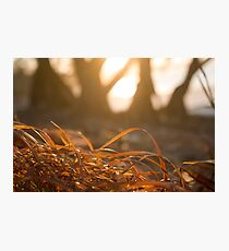 Dried orange red grass closeup beach sunset Photographic Print