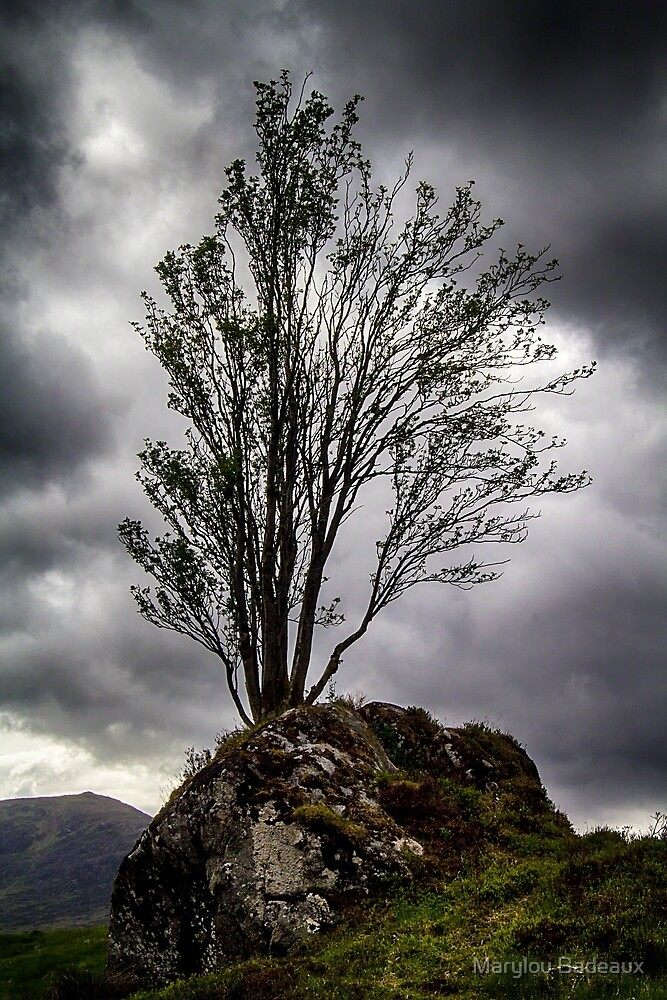 Tree Growing in Rock by Marylou Badeaux