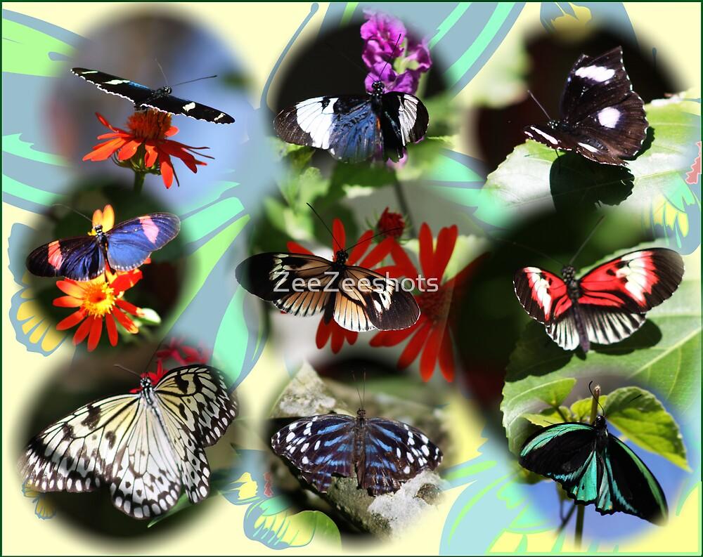 Butterflies by ZeeZeeshots