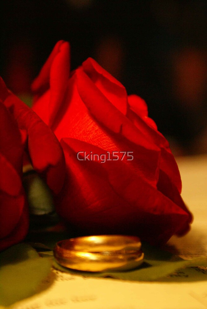 Rose and Rings by Cking1575