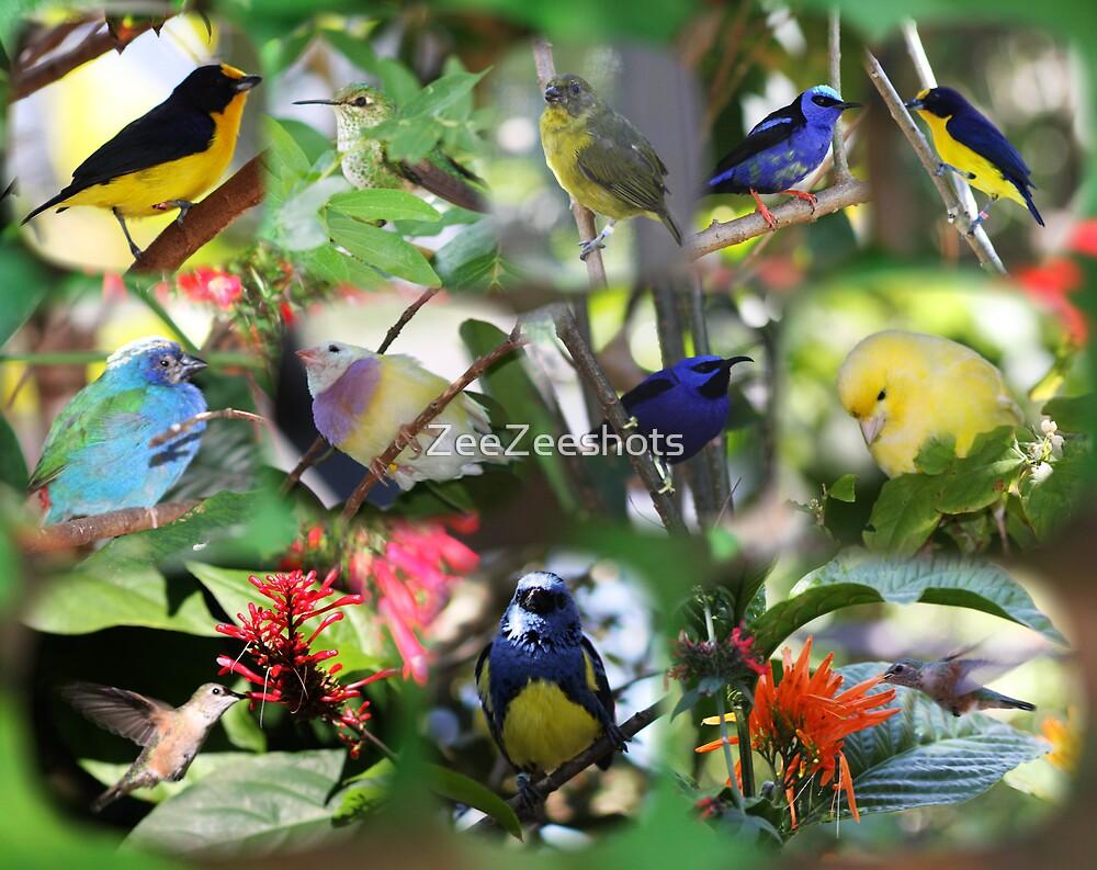 Birds by ZeeZeeshots