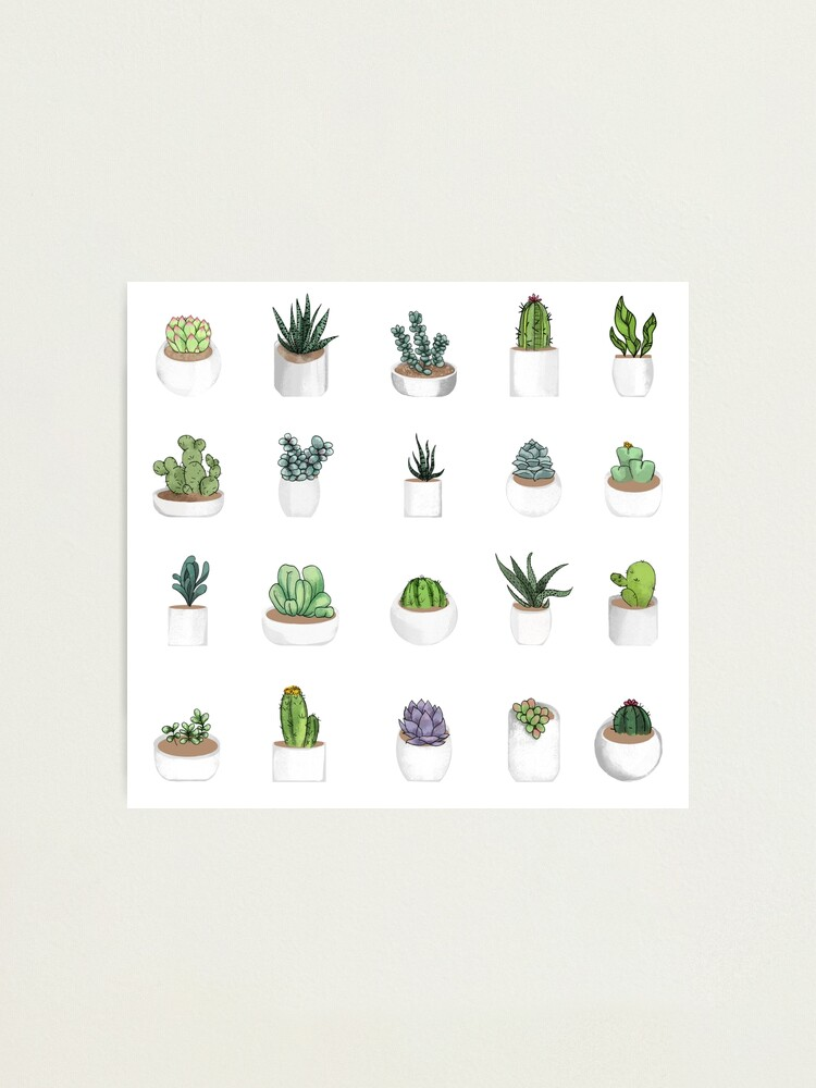 Alternate view of Succulents Photographic Print