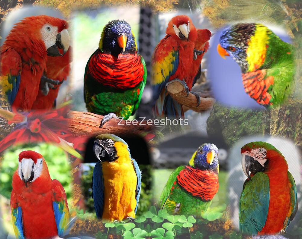 Parrots by ZeeZeeshots
