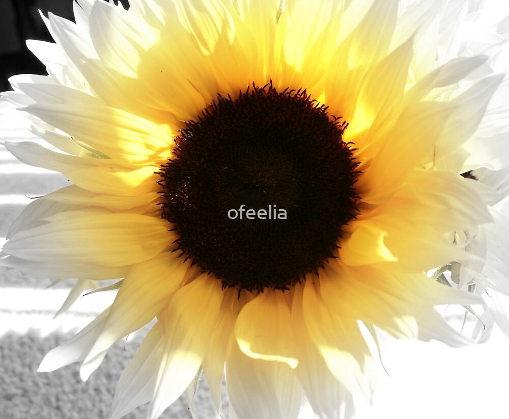 sunflower by ofeelia