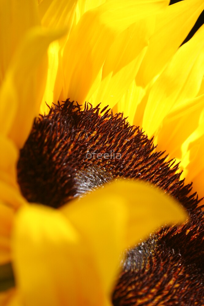 sunny flower  by ofeelia