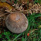 Fungi 2 by dougie1