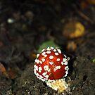 Fungi 8 by dougie1