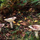 Fungi 10 by dougie1