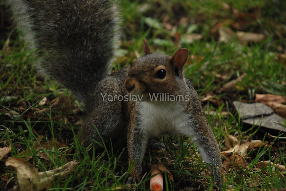 Squirrel  by Yaroslav  Williams