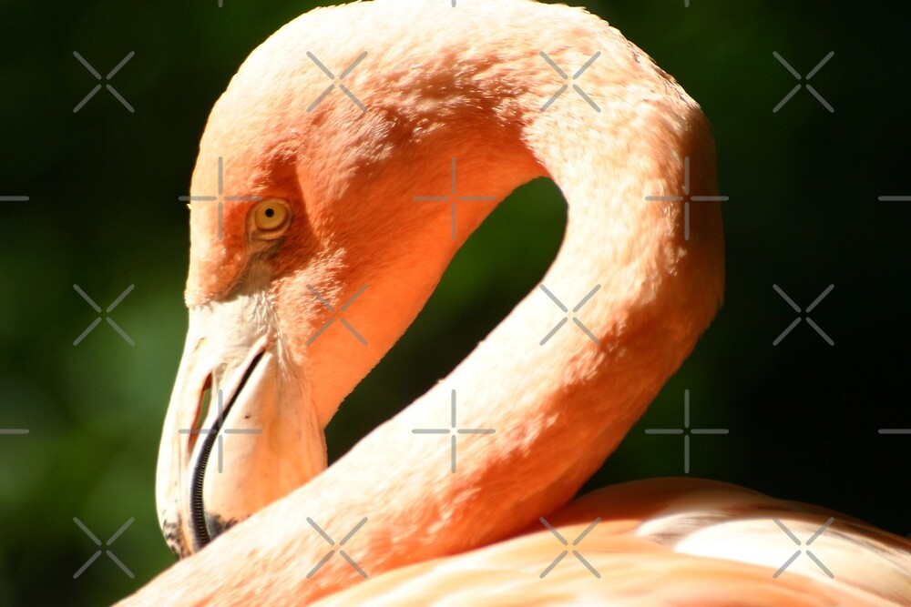 flamingo by EnWout