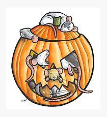 Halloween pumpkin rats Photographic Print