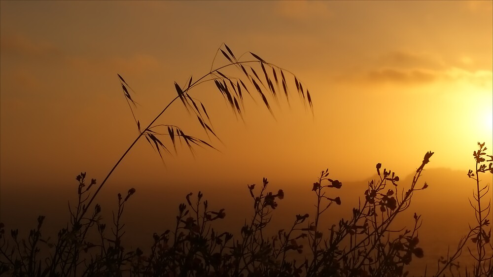 Wildflower Sunset by Marc Payne Photography
