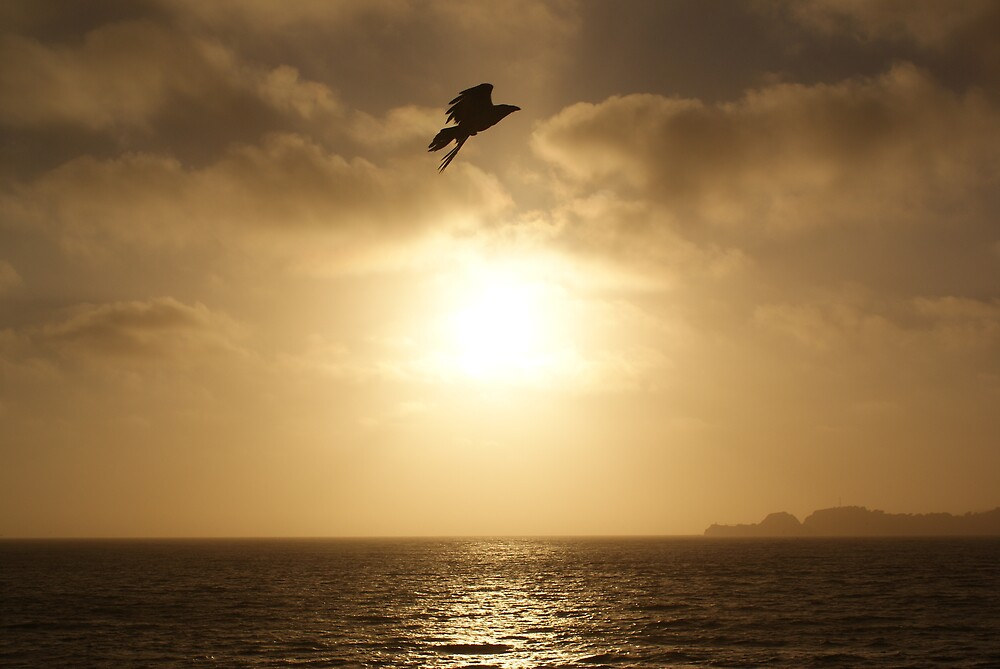 Crow Sunset Silhouette by Marc Payne Photography