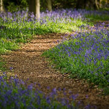 Path through the Bluebells by CarolynEaton
